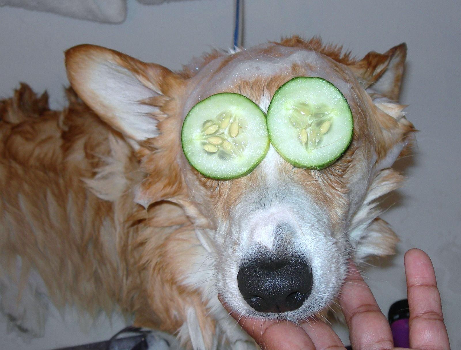 + Spa dog