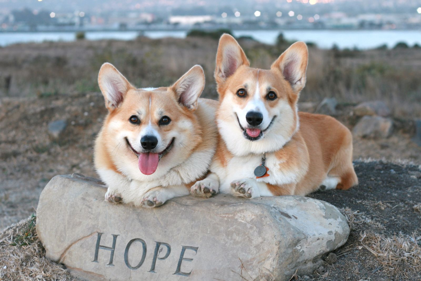 + Hope dogs