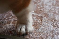 Snow paw