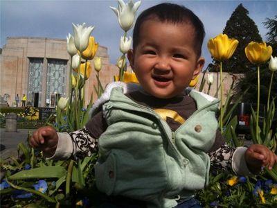 Seattle tulip