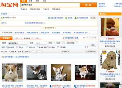 Corgi on taobao 2