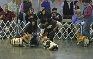 Mariachi_players_corgi_fair_2
