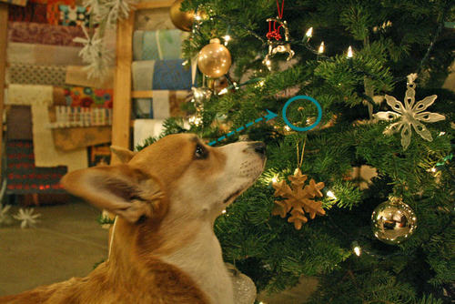 Bryson_eyeing_treat_on_xmas_tree